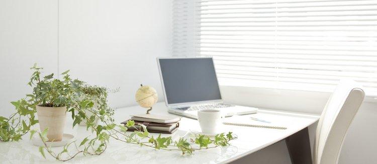 Arredare l 39 ufficio con le piante per aumentare la produttivit - Arredare l ufficio ...
