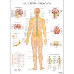 Poster Scientifico